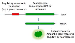 Research papers on gene expression