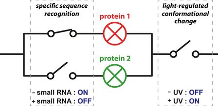 Imputing Gene Expression in Uncollected Tissues Within and
